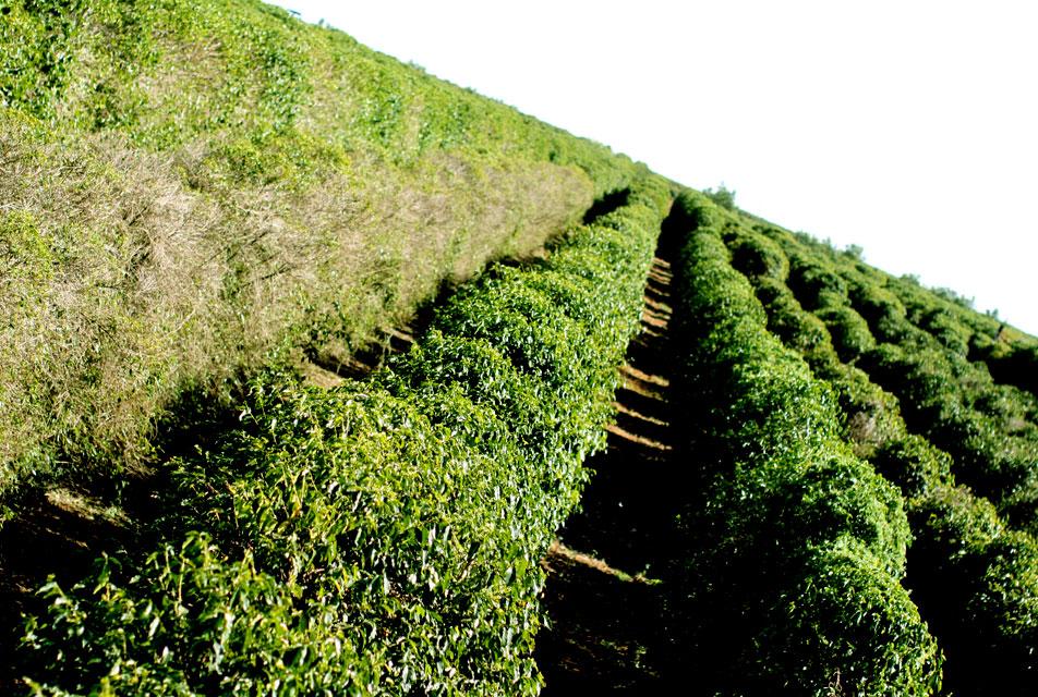 コーヒー農園探訪(ブラジル編)