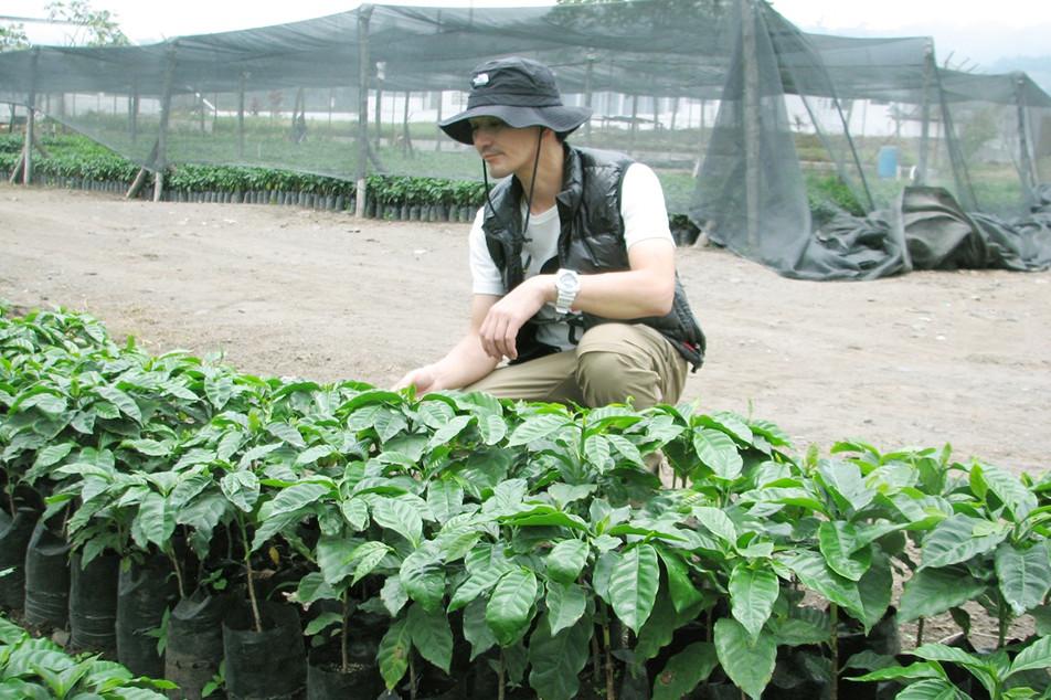 コーヒーの苗木
