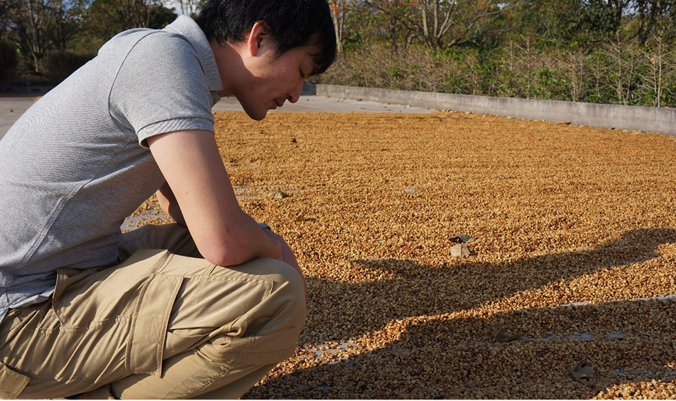 「精製」がコーヒーの味を大きく分けます。