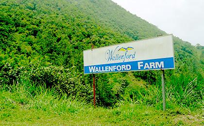 ご用意したのは、ジャマイカ産のブルーマウンテンの中でも高い品質を誇る「ウォーレンフォード」規格のものです。