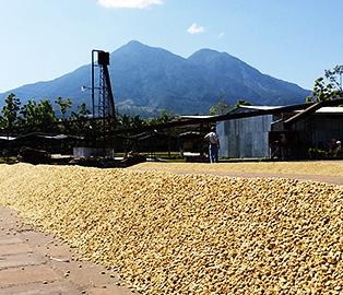 エルサルバドル エル・カルメン農園