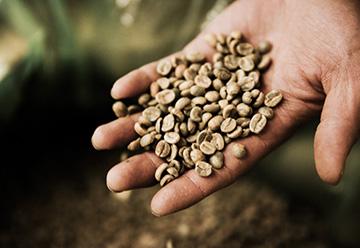 産地から届いたばかりの生豆。