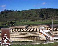 タンザニア モンデュール農園 本体価格 1700円 (税込1836円)