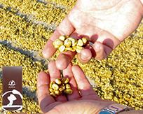 コスタリカ エル・カフェタル農園 本体価格 3350円 (税込3618円)